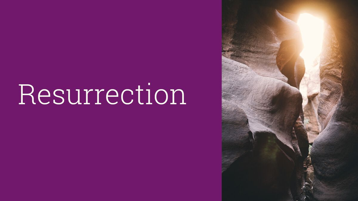Viva! Resurrection image number null