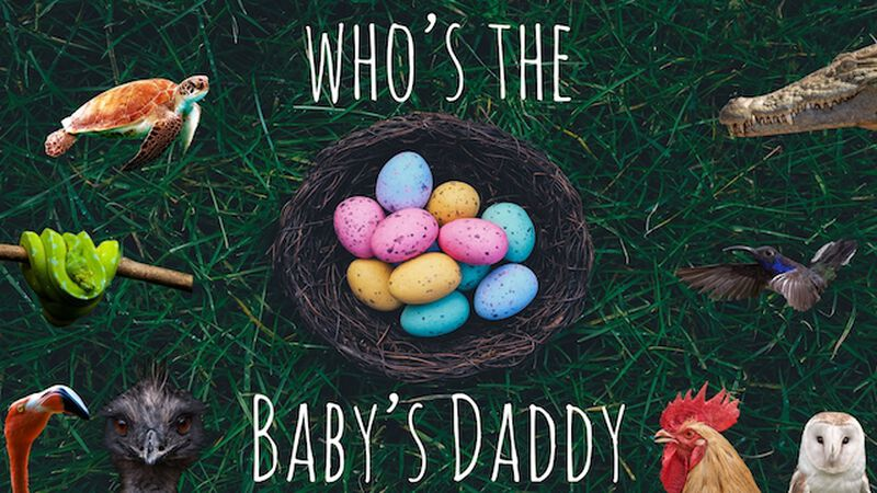 Who's the Baby Daddy?