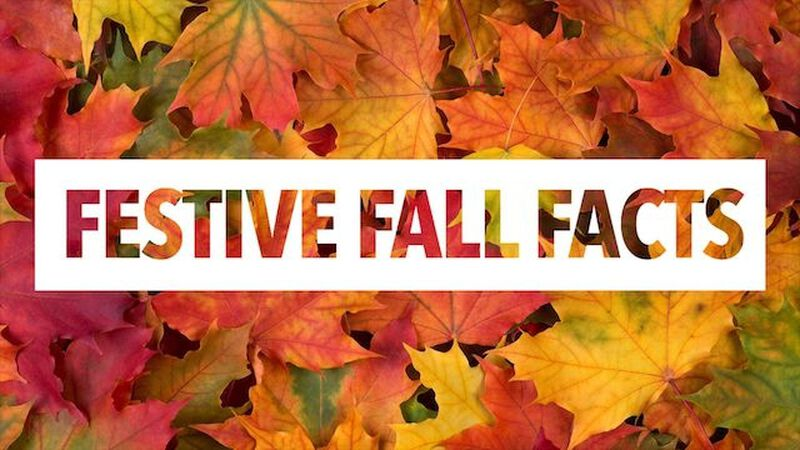 Festive Fall Facts